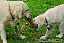 dogs-2556820_960_720